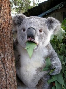 09-extremely-shocked-animals