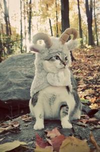 ram cat